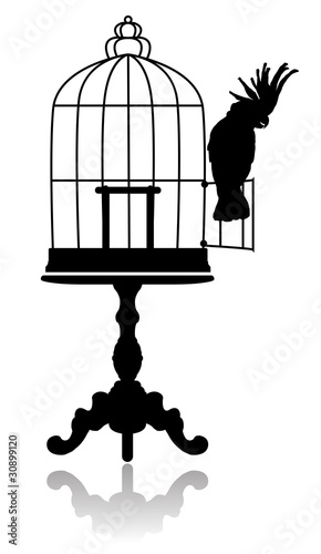 Poster Birds in cages Birdcage
