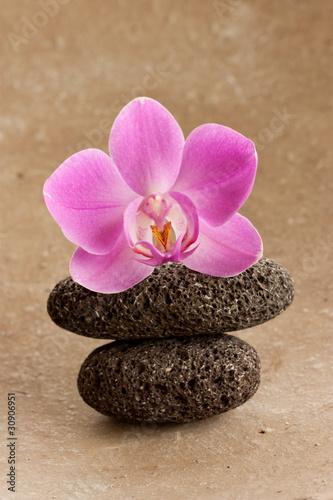 kamienie-i-rozowy-kwiat