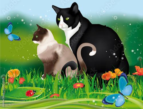Printed kitchen splashbacks Cats mici in giardino