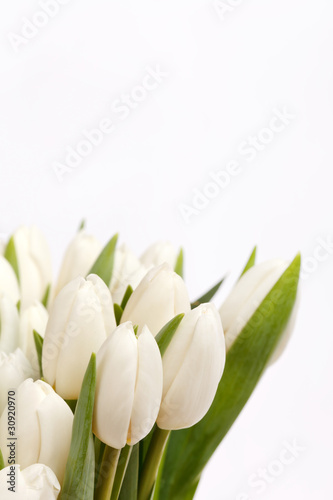 Fototapety, obrazy: beautiful tulips
