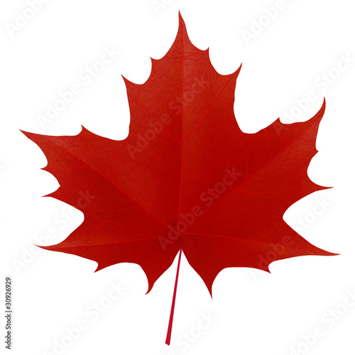 Fotografía Realistic red maple leaf isolated on white background