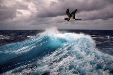 Fototapetasea wave and seagull