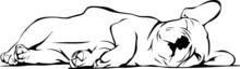 French Bulldog Baby Sleeping