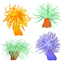 Various Sea Anemones - Vector
