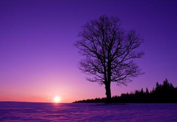 Fototapeta na wymiar lonely tree at sunset