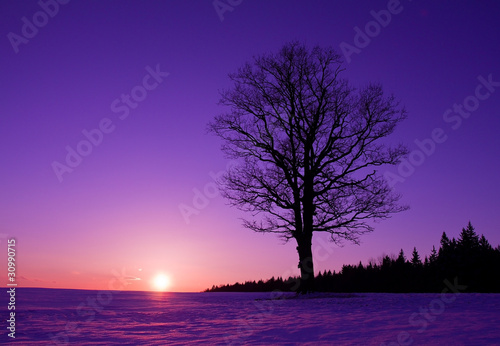 Fotobehang Violet lonely tree at sunset