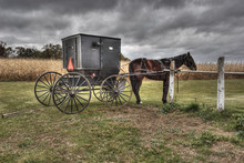 Amish Carriage And Horse Princ...