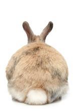 Rabbit (rear View)