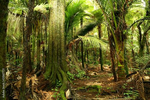Naklejki dżungla  zielona-dzungla
