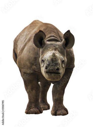 Foto op Aluminium Olifant Endangered Baby Black Rhinoceros Isolated