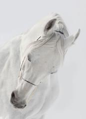Panel Szklany Optyczne powiększenie white horse