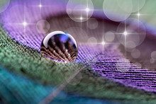 Water Drop On Peacock Feather ...