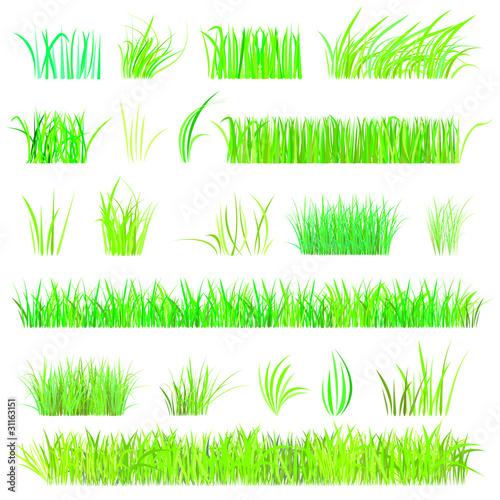 Fototapeta set - gräser obraz na płótnie