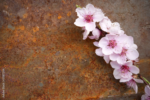 Poster de jardin Dahlia fiori di pesco su sfondo ruggine