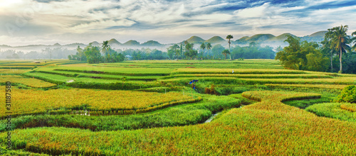 Recess Fitting Rice fields Paddy rice panorama