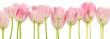 Rosa Tulpen Collage - Frühlingsblumen