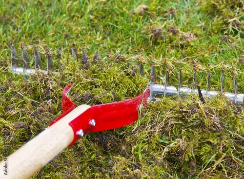 Fotografie, Obraz  Moss Rake for Yard Work