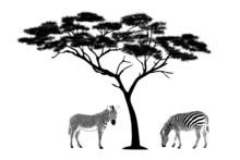 Zebras Under The Tree Illustration