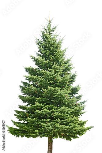 Pine Tree Tapéta, Fotótapéta