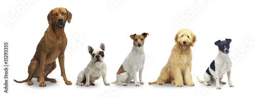 5 sitzende hunde Fototapete