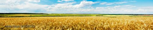 Canvas Prints Honey Panoramic view of a wheat field