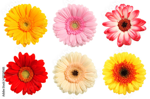 Recess Fitting Gerbera Bunte Deko Blumen