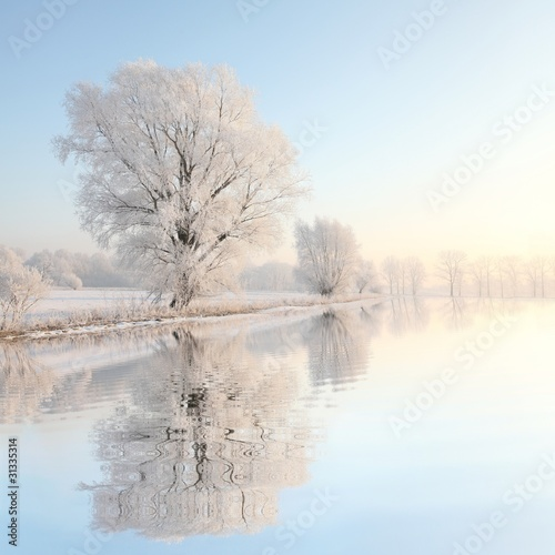 Poster Blauwe hemel Frosty winter tree against a blue sky with reflection in water