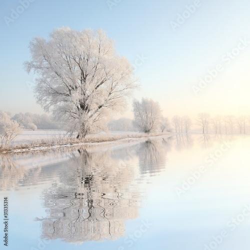 Fototapeta zima zimowe-drzewo-z-odbiciem-w-wodzie