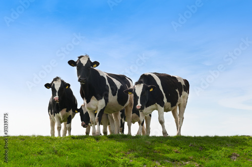 Obraz na plátně Cows on on farmland