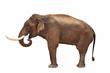 Elefant isoliert mit exaktem Beschneidungspfad
