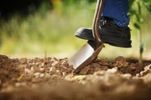Digging Soil With Shovel
