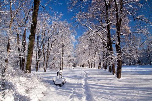 snowy-warsaw-park