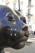 Chat du Raval de Barcelone