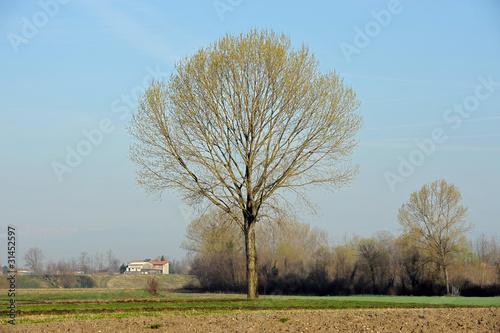 Tela  paesaggio 1562