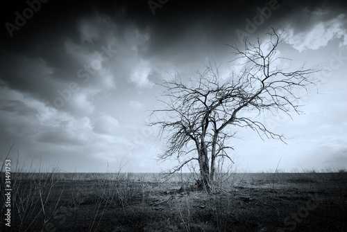 Spoed Foto op Canvas Grijze traf. Lonely dead tree