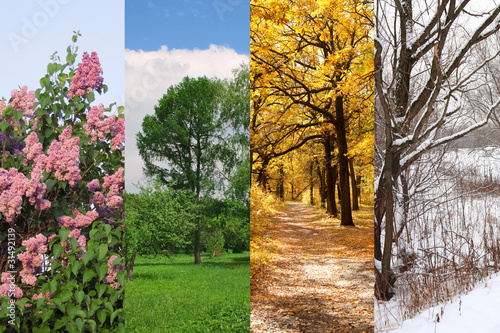 Fotografie, Tablou  four seasons spring, summer, autumn, winter trees collage