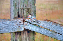 Close Up Of A Wooden Fence Tha...