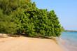 Beach , Thailand .