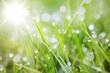 canvas print picture - sparkling grass