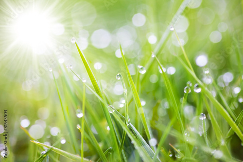 Fototapeta premium gazowana trawa