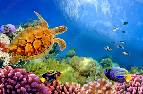 Poster Sous-marin Photo of a coral colony and turtle