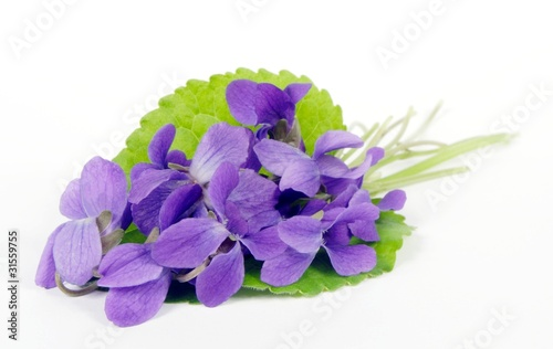 Fototapeta violets on white background obraz