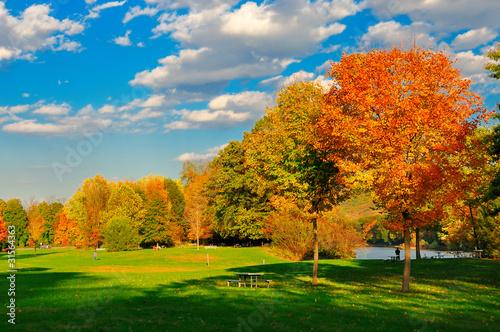 Fotografie, Obraz  Fall foliage and a field.