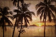Palmier Et Coucher De Soleil, ...