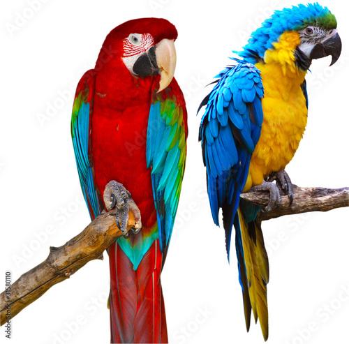 Foto op Aluminium Papegaai Ara Parrots