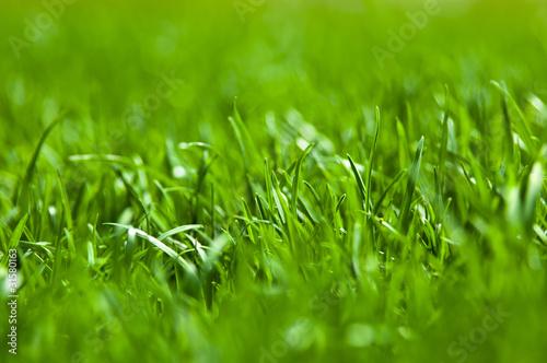 Valokuva  Grass texture
