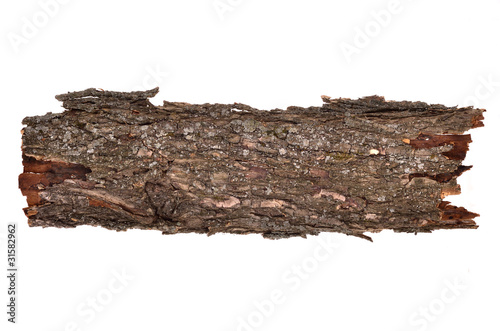 Close-up of isolated broken bark stub log with wooden texture Canvas Print