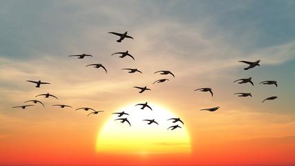 Panel Szklany Podświetlane Wschód / zachód słońca 渡り鳥