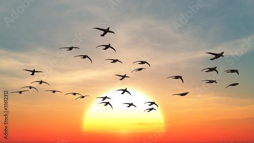 渡り鳥 Fotobehang