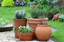 Potted Gardening